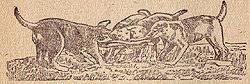 Щенки, играющие с тряпкой